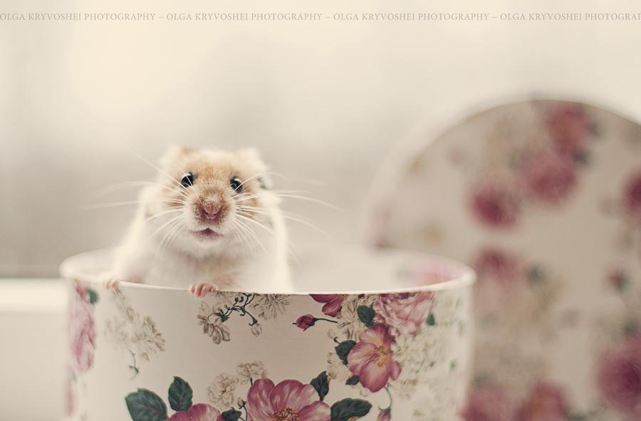 как делать фотографии домашних животных