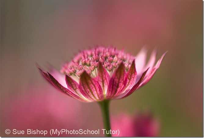 как фотографировать цветы в сложных условиях