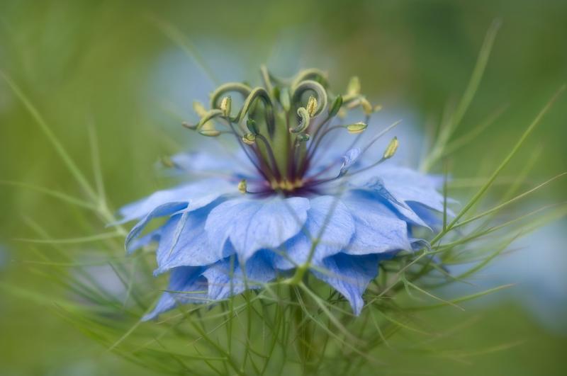 как фотографировать цветы в сложных условиях освещения