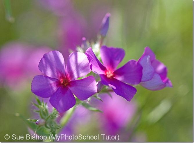 освещение для фотографии цветов