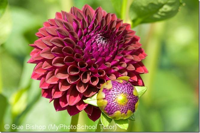 прямое освещение в фотографировании цветов