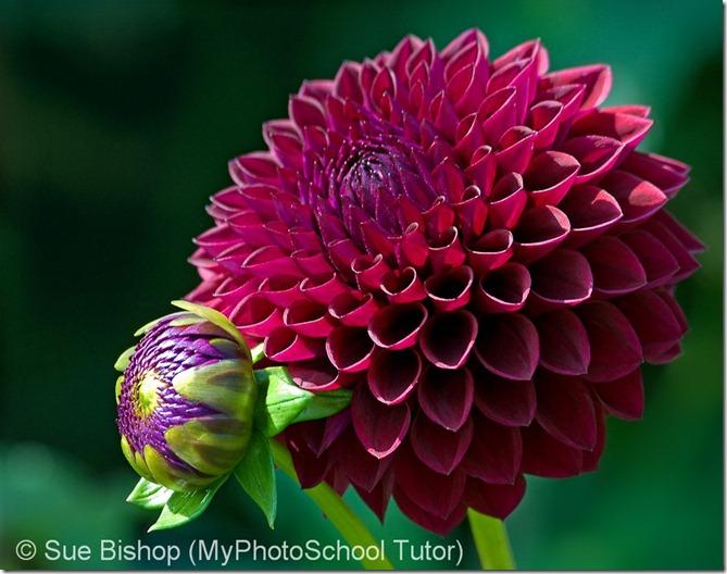 сложности освещения в фотографии цветов