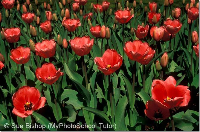 ошибки при фотографировании цветов
