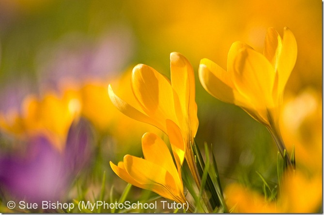 как правильно фотографировать цветы