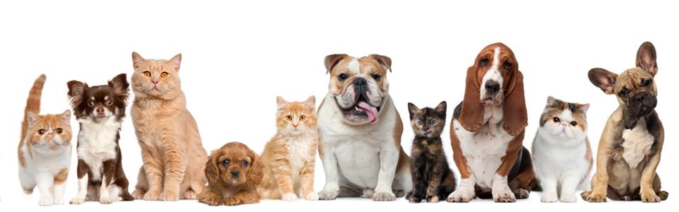 правила фотографирования домашних животных