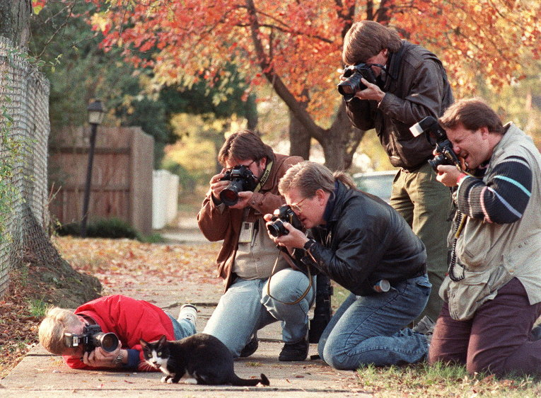 как фотографировать котов и кошек