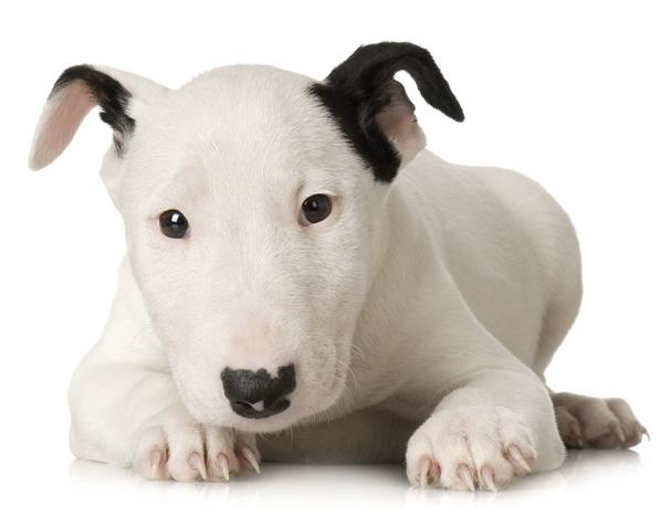 как привлечь внимание собаки при съемке