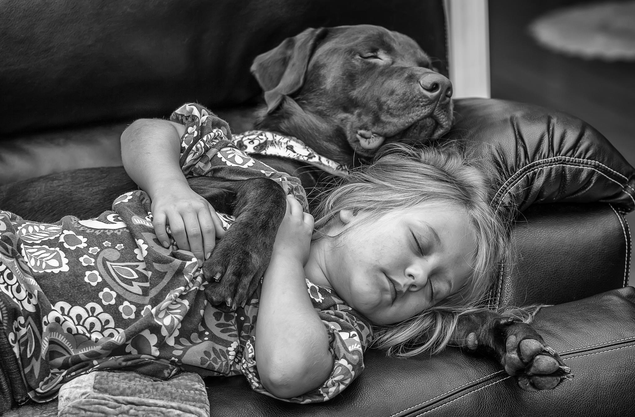 идеи для домашней фотосессии с животными
