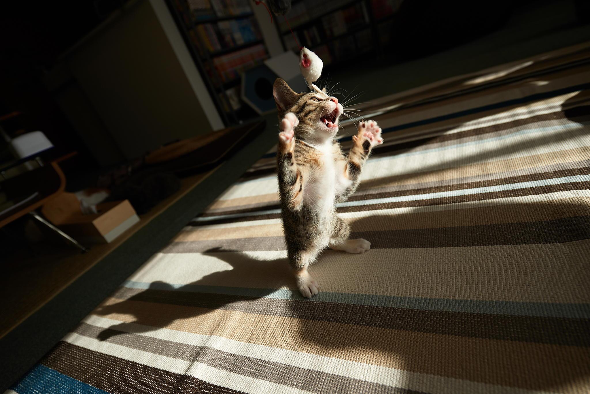 как правильно сфотографировать кота