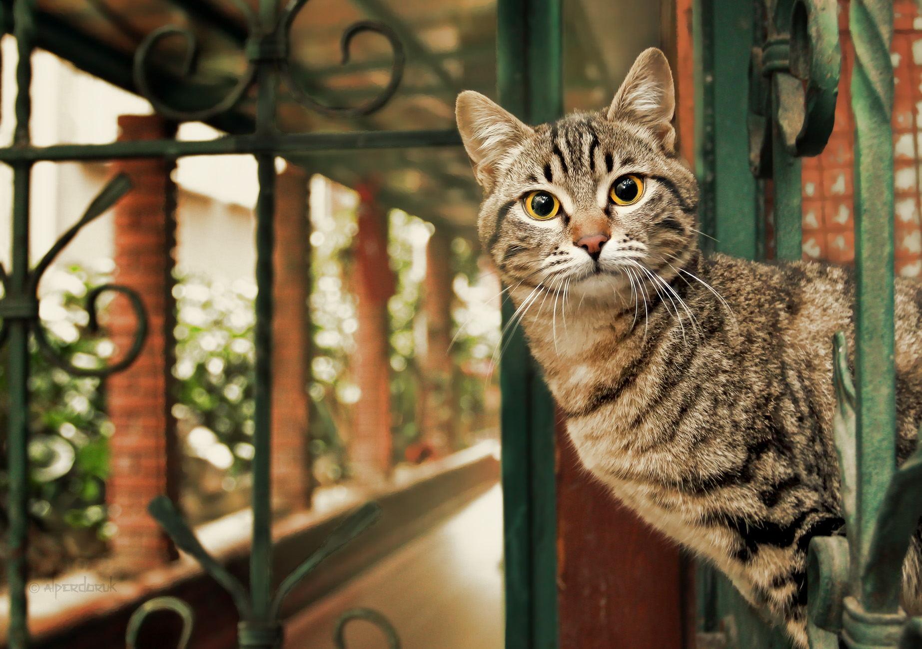 как фотографировать животных дома