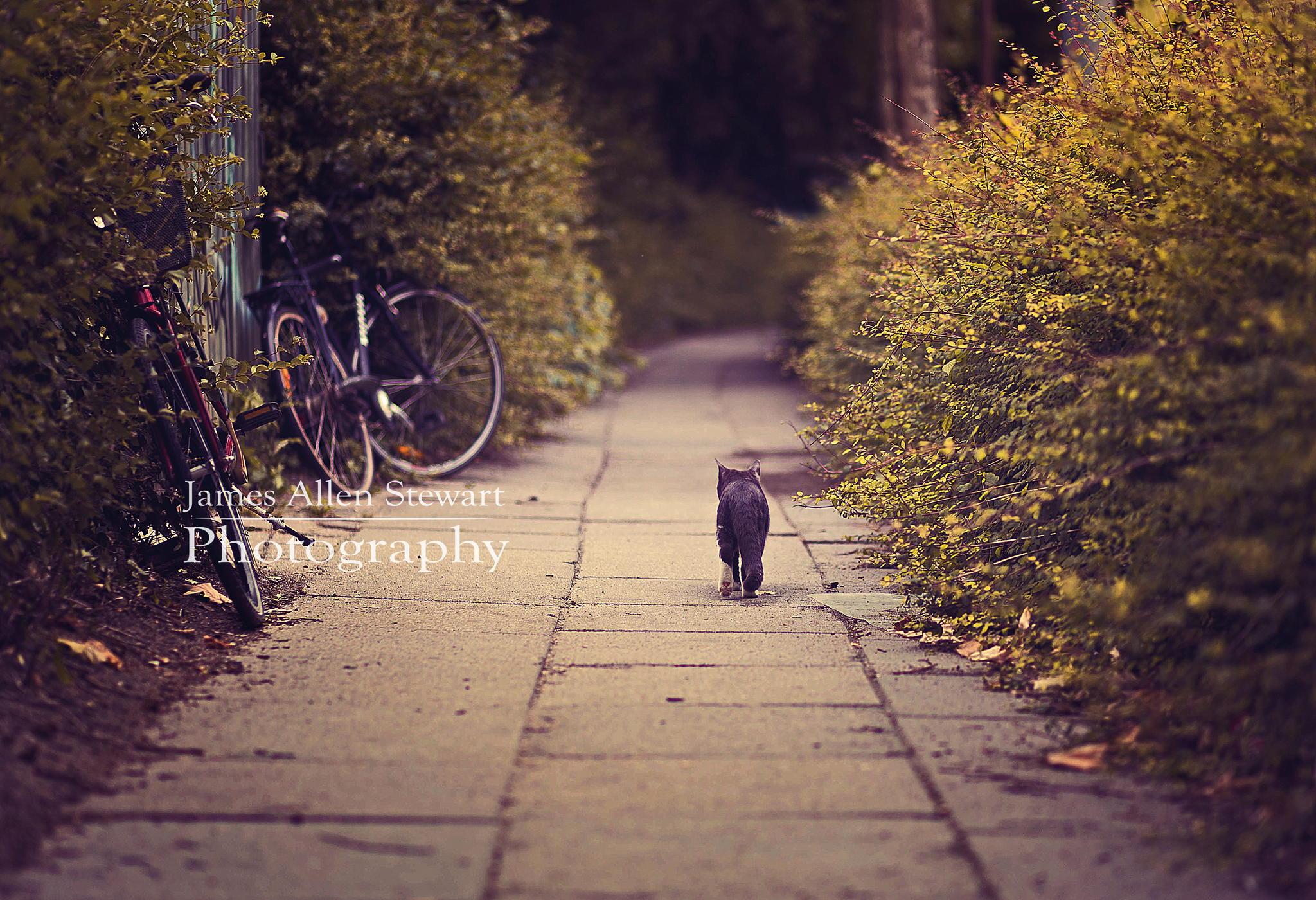 как правильно вести себя на фотосессии с животными