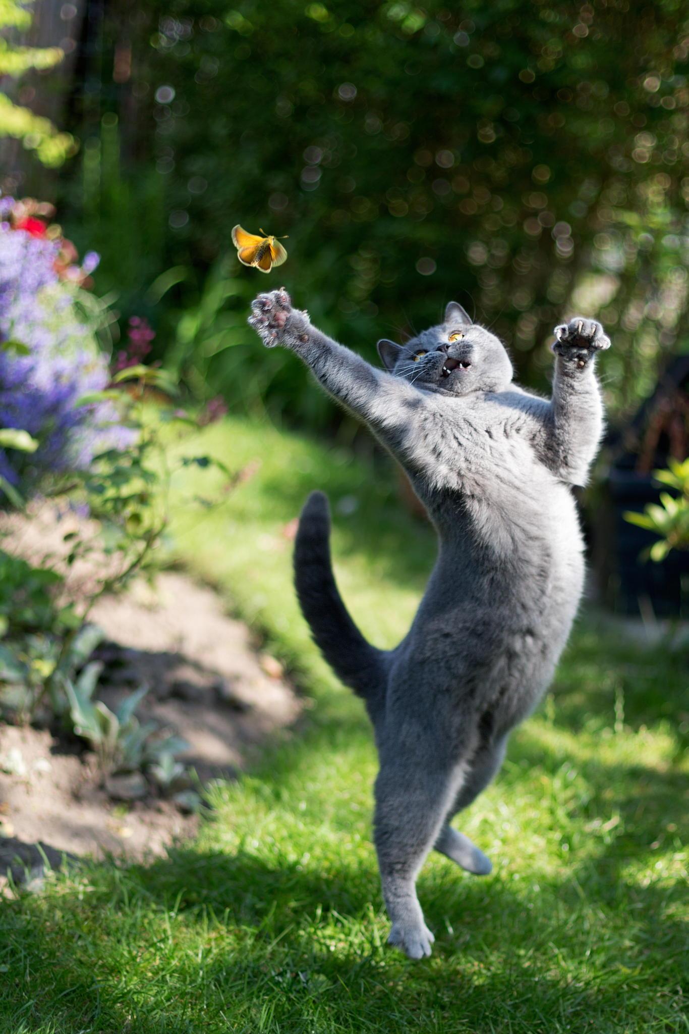 как заинтересовать животное во время съемки