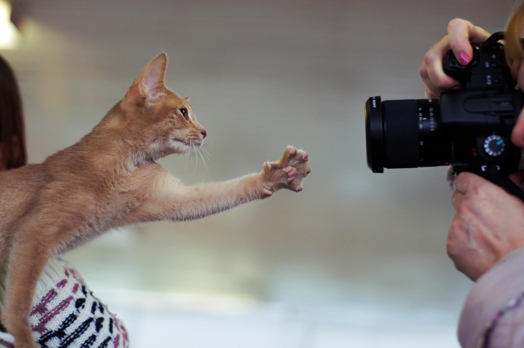 что снимают фотографы