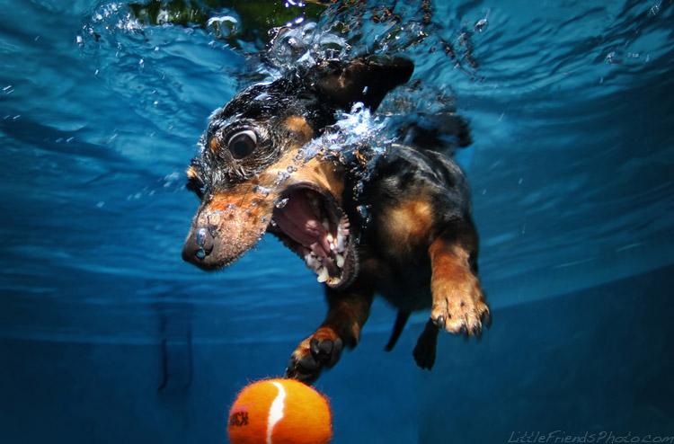Подводные собаки – сделай свой день веселее!