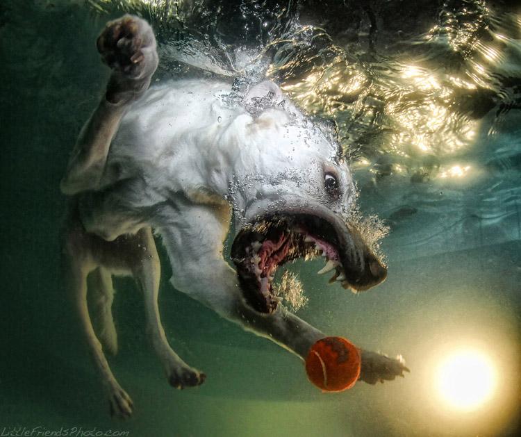 ©Seth Casteel проект ныряющие собаки