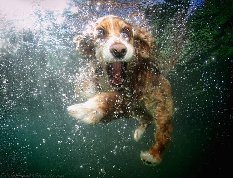 проект подводные собаки
