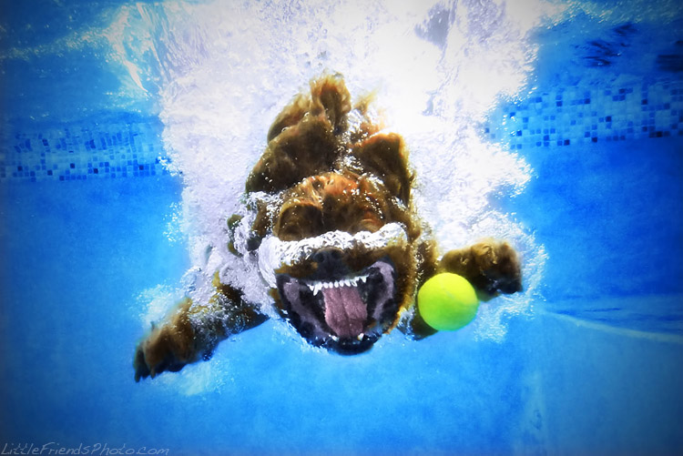 фотопроект ныряющие собаки
