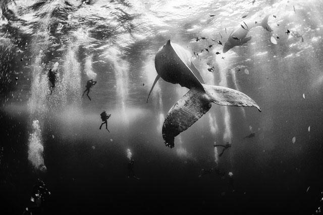 by Anuar Patjane Floriuk