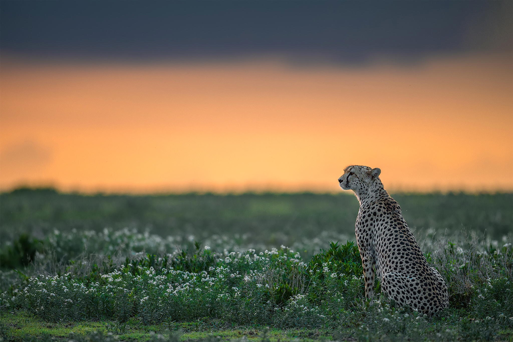 by Marc MOL