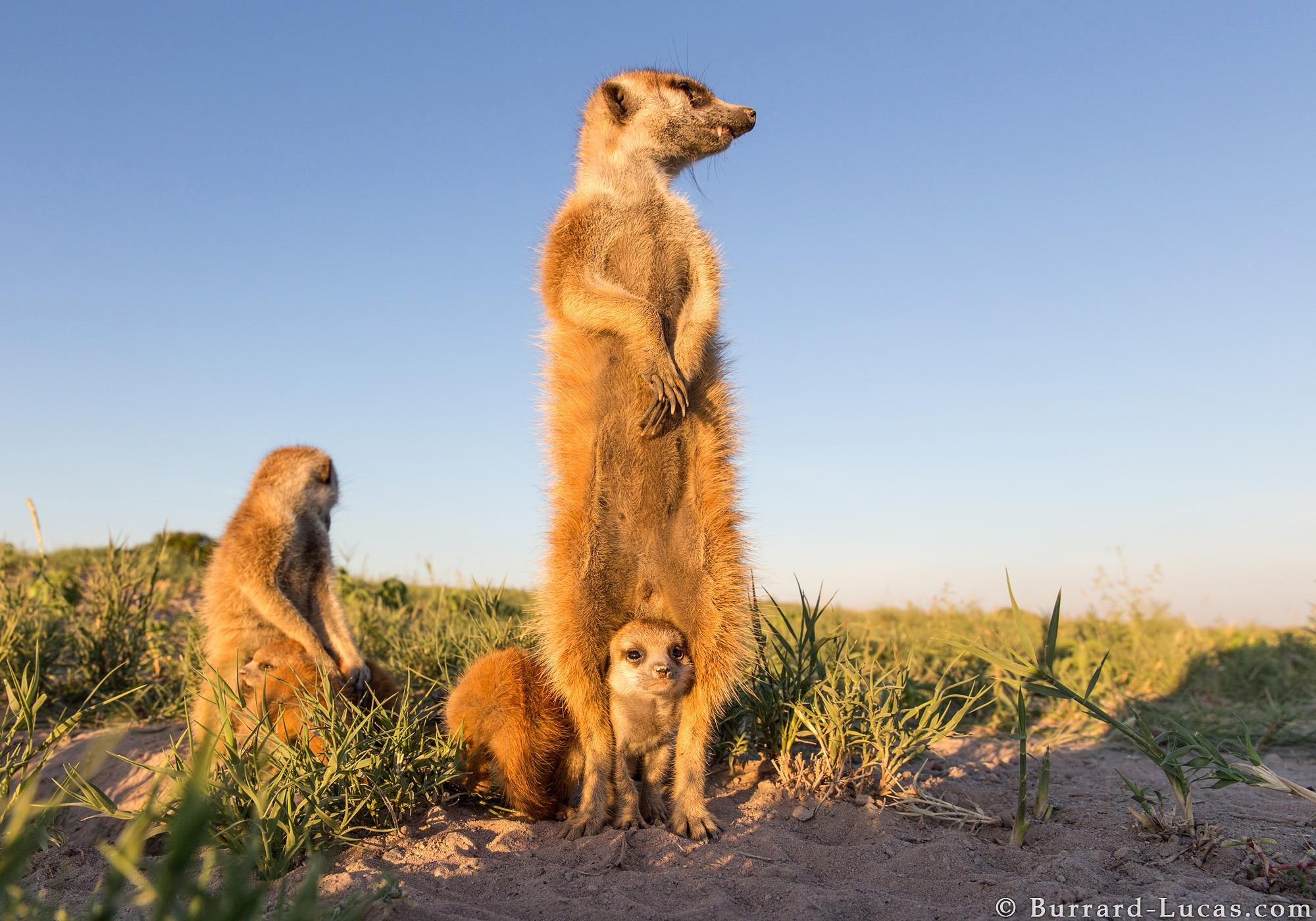 by Will Burrard-Lucas