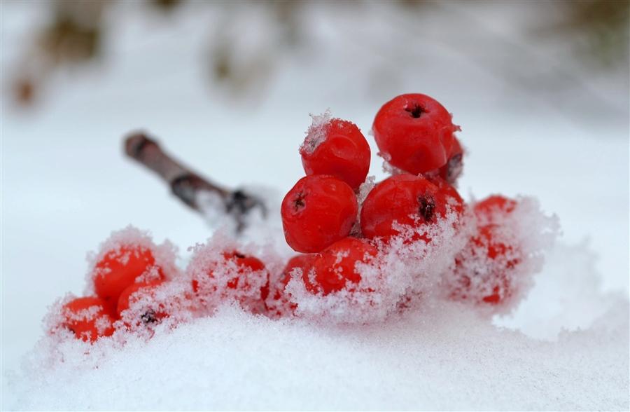 рисунок из ягод на снегу фото так всё точно