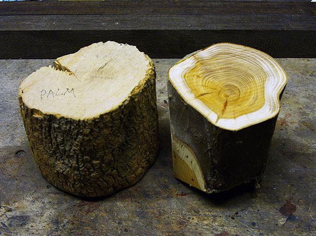 выбор древесины для деревянного объектива