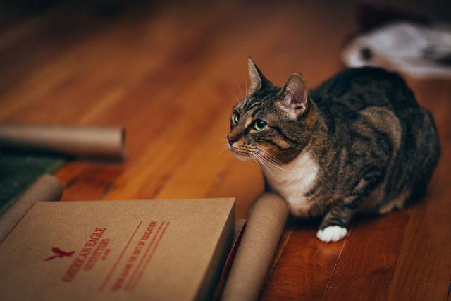 как фотографировать собак и котов