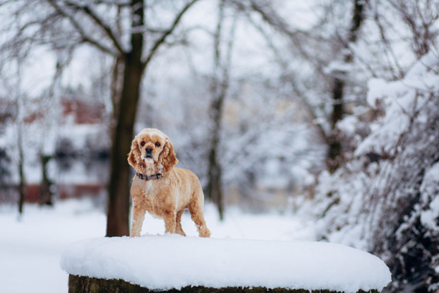 параметры для съемки домашних животных