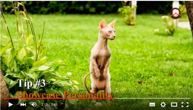 видеоурок как снимать животных