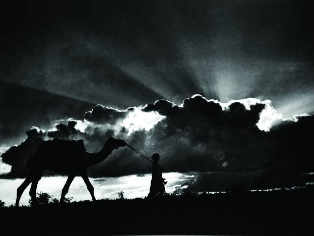 снимок с верблюдом Abidmian Lalmian Syed