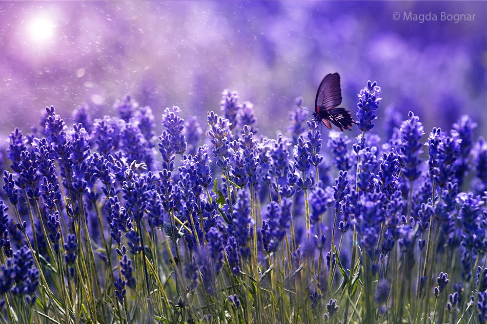 by Magda Bognar