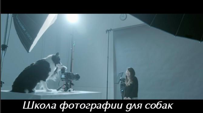 видеозарисовка школа фотографии для собак
